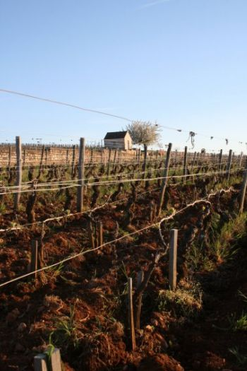 Some news from the vineyards