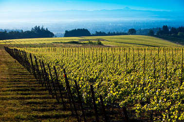 The Drouhin Family extends its presence in Oregon